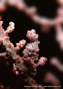 A pigmy seahorse will need a macro lens and better lighting