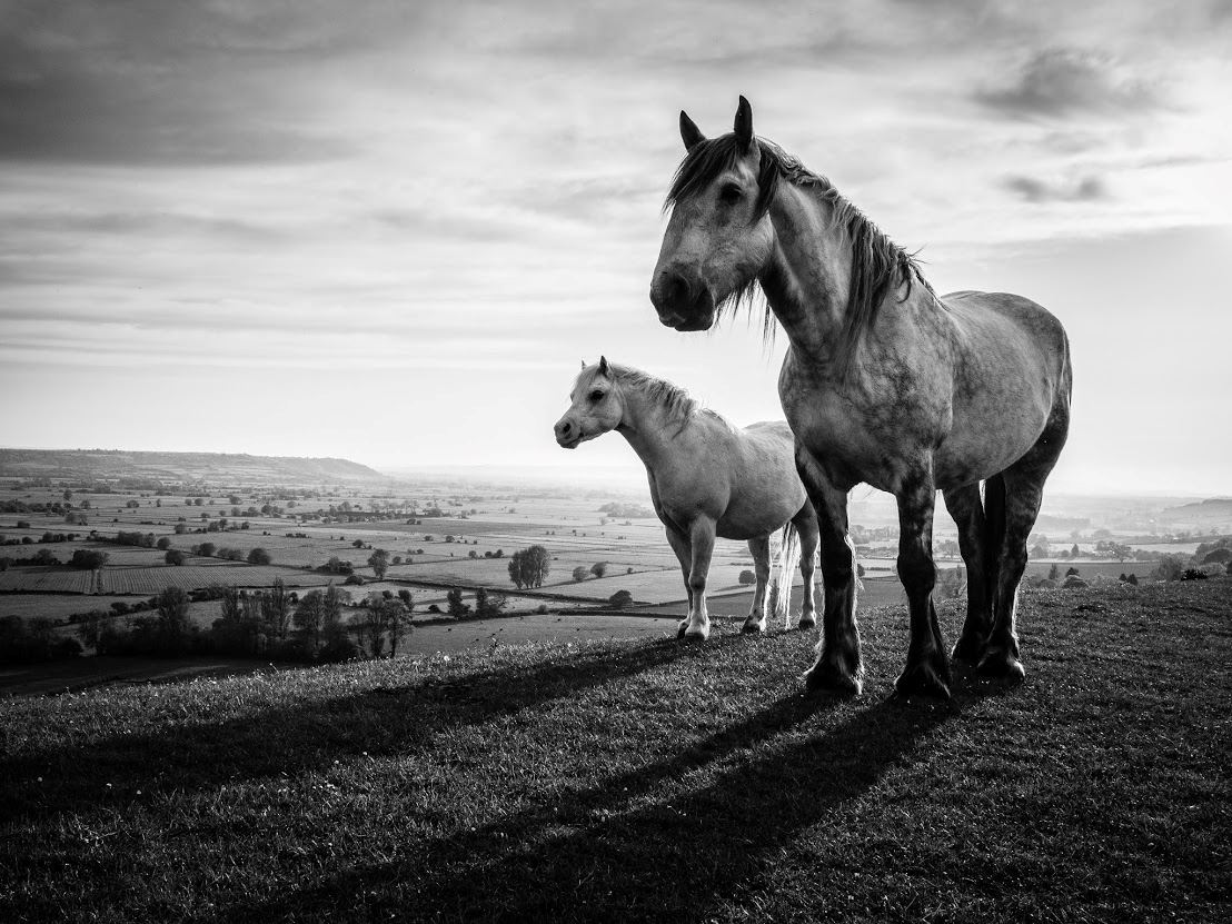 FIRST-Kevin-Ireland-Two-Horses.jpg