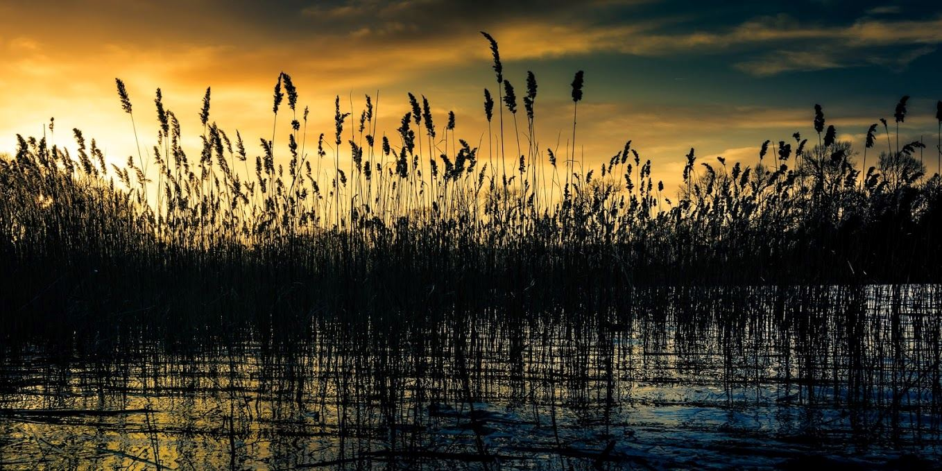 3.-THIRD-Bulrushes-at-Sundown-1-of-1-Jonathan-Casey.jpg
