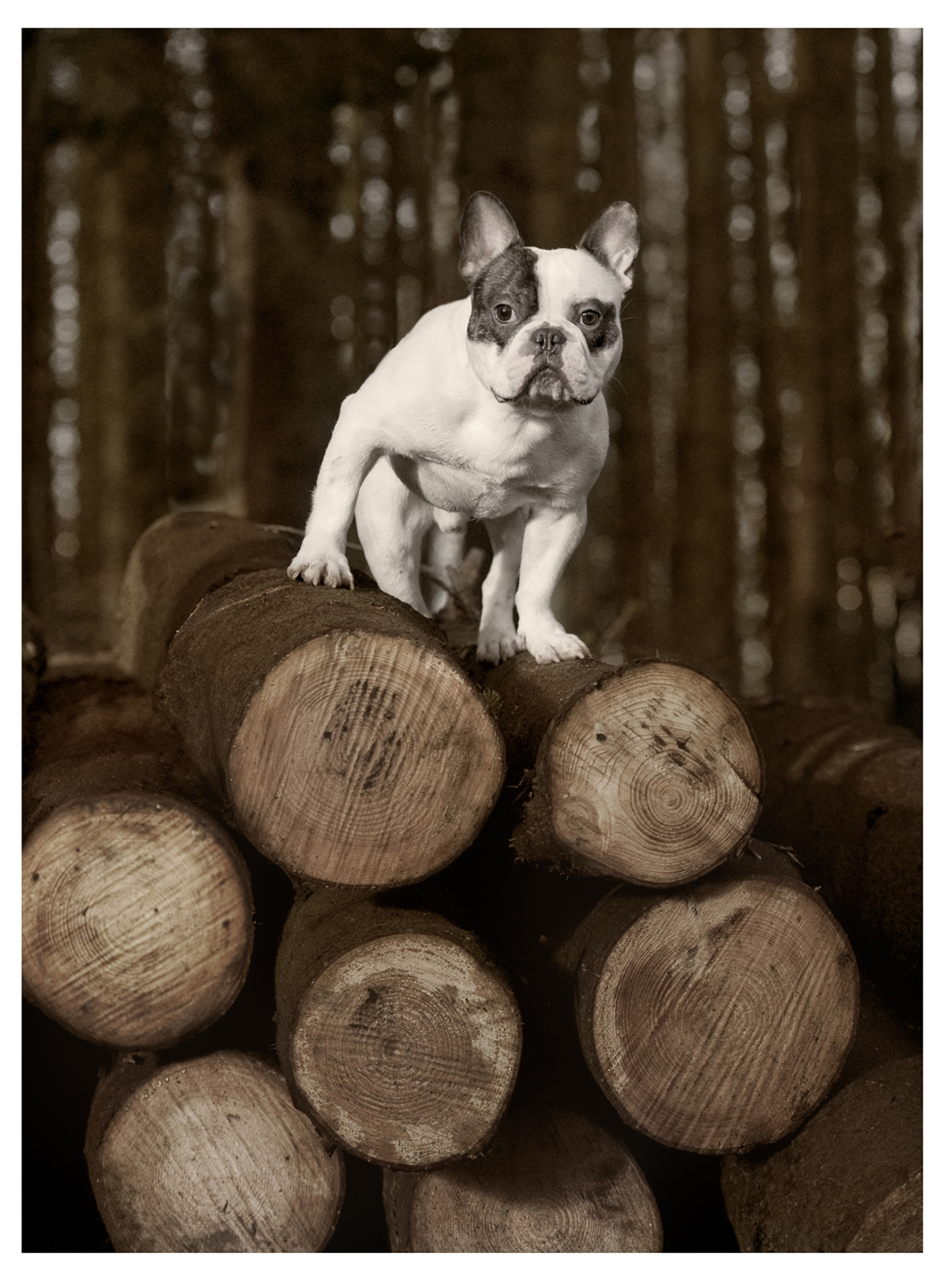 Dog on a pile of logs
