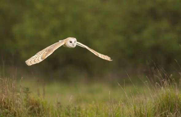 How to photograph barn owls | Wex Photo Video