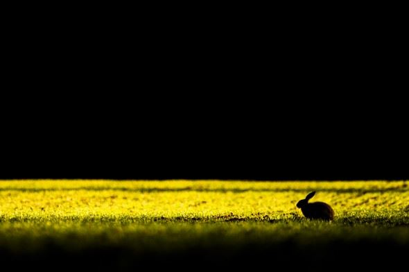working with the light can produce some striking images, Silhouettes of Hares always seem to work well