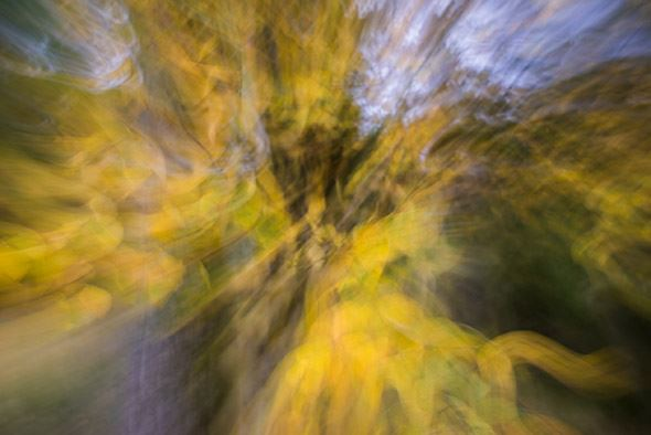 A Guide To Intentional Camera Movement Photography