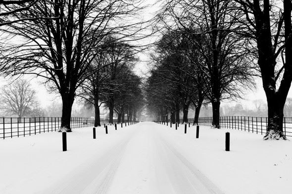 Darker subjects against the snow are great for high-contrast monochrome images.