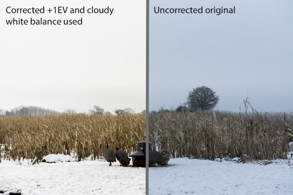 This comparison shows the difference made by a simple adjustment to exposure compensation and white balance