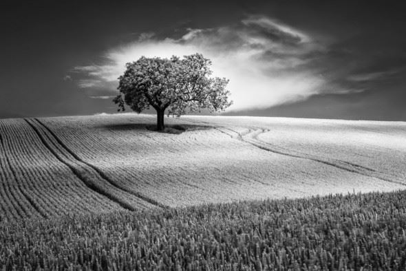 April 2015 Google+ Photography Competition - Black and White - Third place