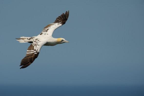 How to Photograph Seabirds
