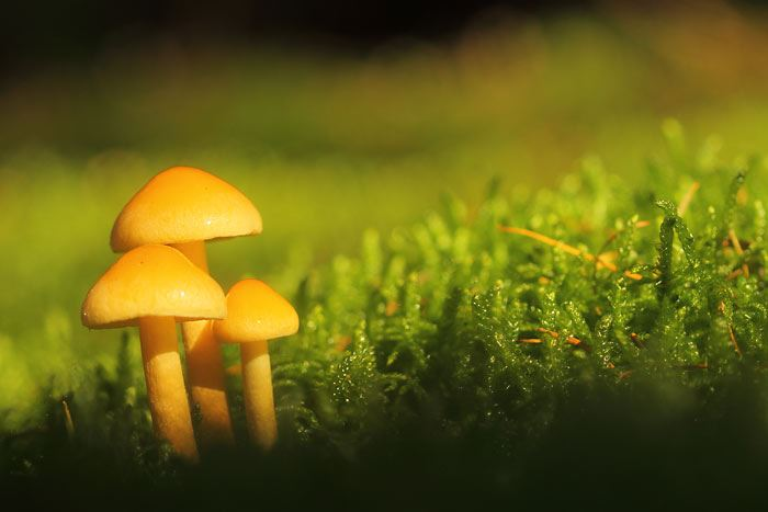 Wex Walkabout: Holt Country Park – Fungi Macro Photography