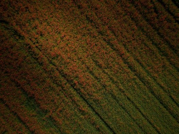 David Hopley's Drone Landscapes