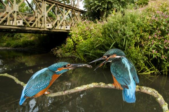 On the Trail of Kingfishers