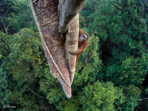 2016 Wildlife Photographer of the Year – winners announced