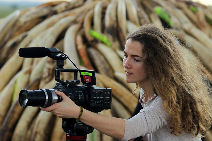 "Behind the Shoot: ""A Lion's Tale"" – Wildlife Documentary"