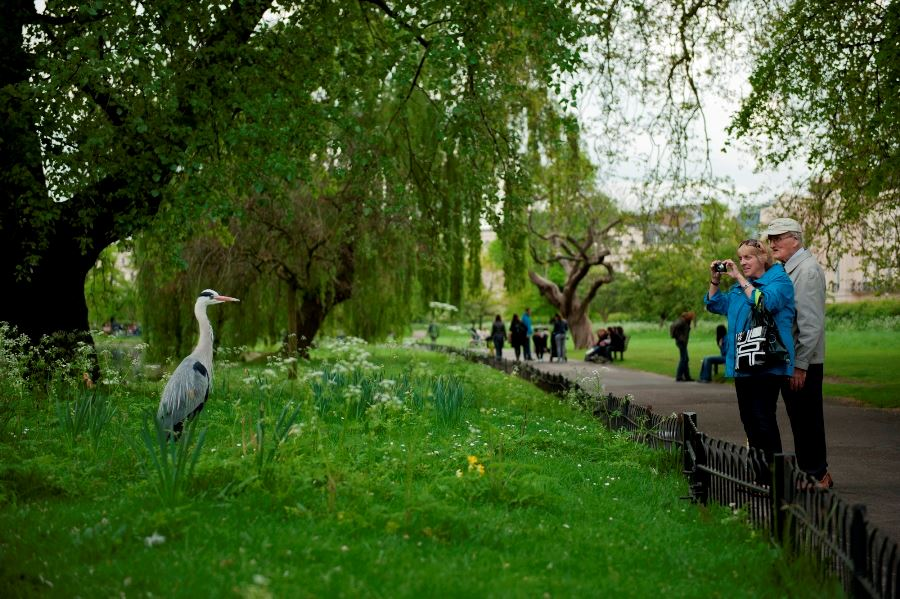 Photographing Wildlife in London Parks