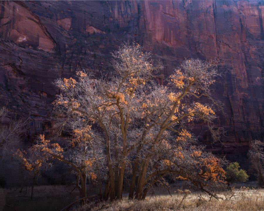 Wait for the Opportune Moment | Landscape Photography in Zion National Park