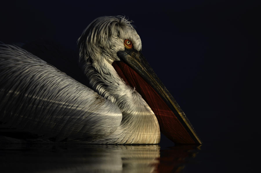 Ellie Rothnie uses high-key and low-key lighting to produce creative wildlife photographs in-camera