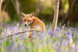Photograph wildlife on your doorstep | The local patch and why you need one