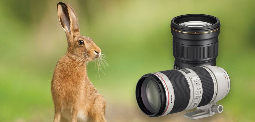 wildlife and Sport lenses banner
