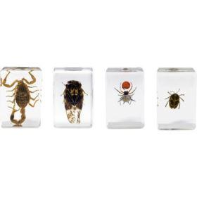 Celestron 3D Bug Specimen Kit #4
