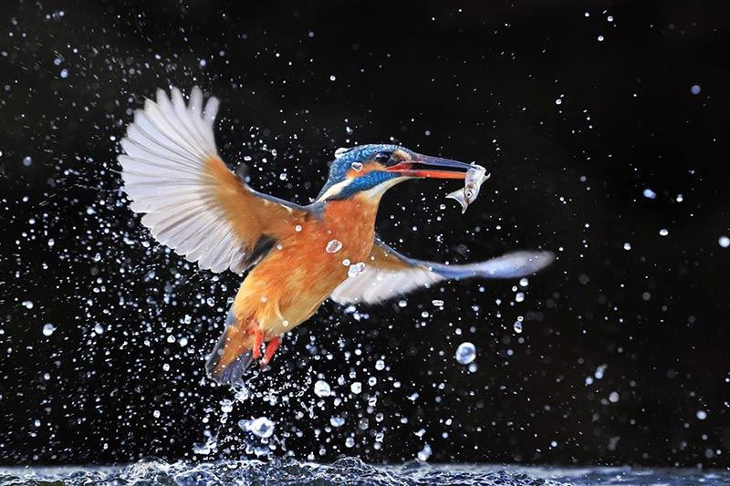 Canon EOS 1D X Mark II Digital SLR Kingfisher sample image by Andy Rouse