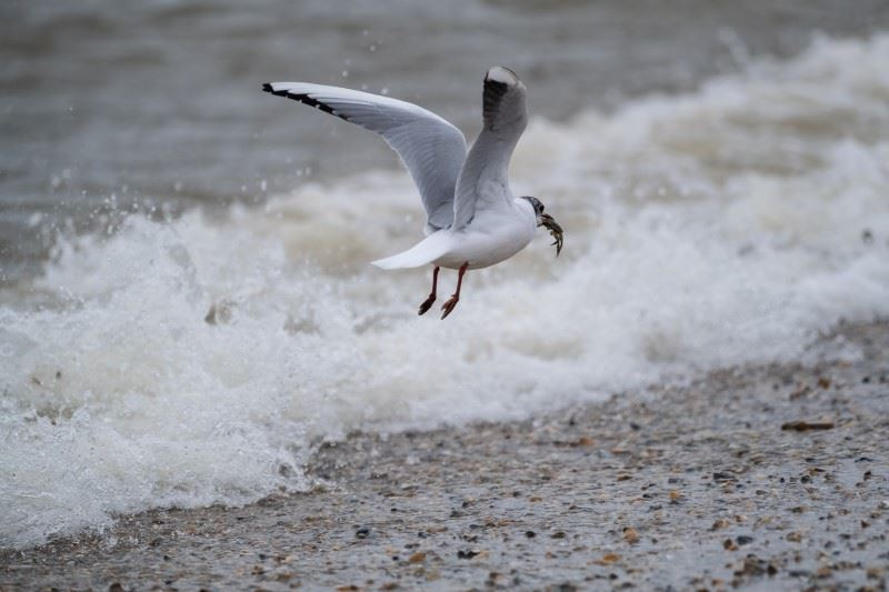 Fuji XT4 sample image of seagull taking off over a breaking wave