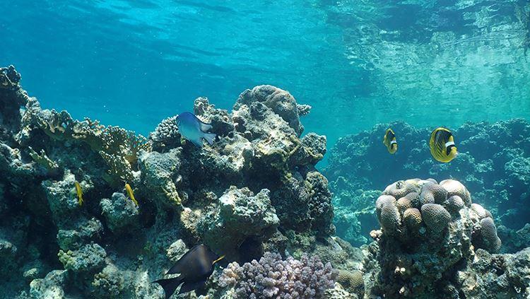 Olympus Tough TG-6 underwater sample image