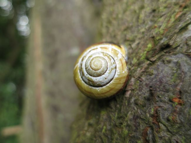 Canon S100 sample macro image of a snail