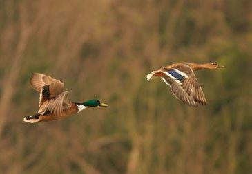 Bird Shot 2