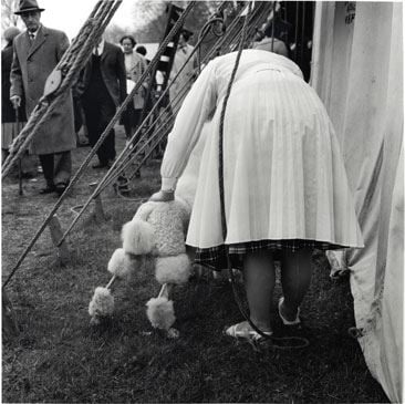Jane Bown - County Dog Show
