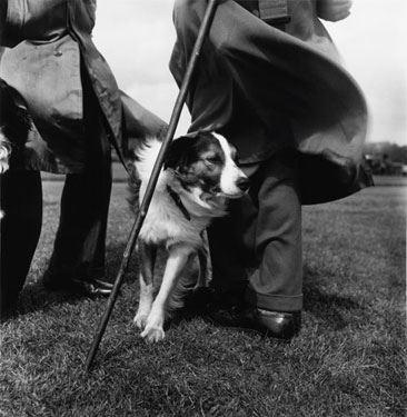 Sheepdog - J Bown